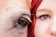 Pferde-Fotografie-Trier_01