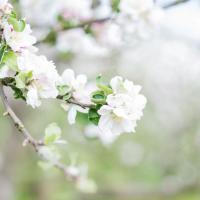 Boho-Spring-Fruehling-Apfelbluete-Hippie-Draussen-Fotoshooting-Trier06