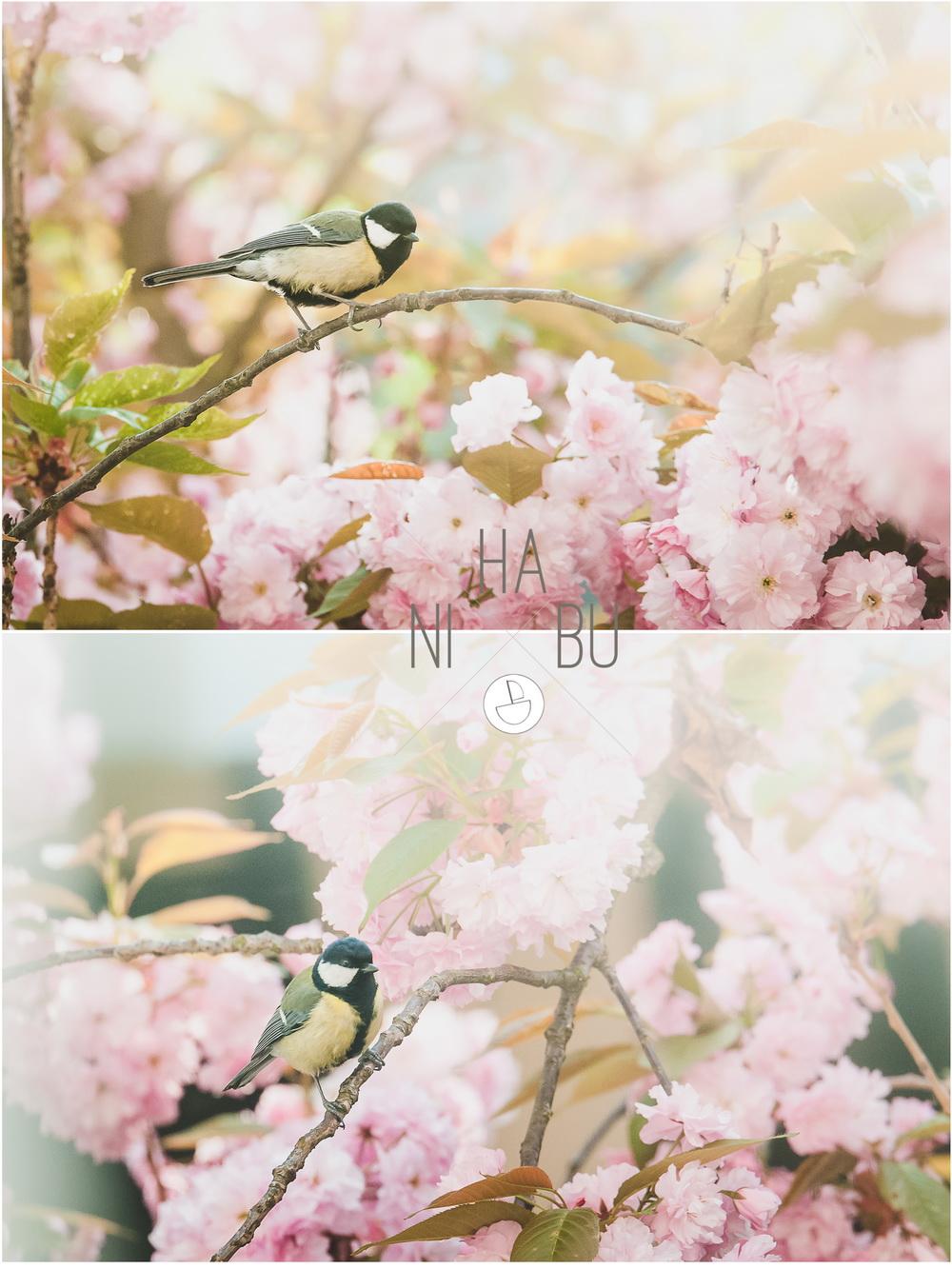 Spatz-Blüte-Fotografie